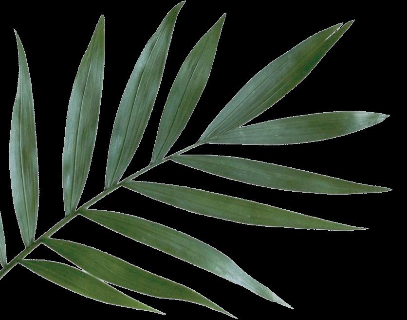 folha-grande-lateral